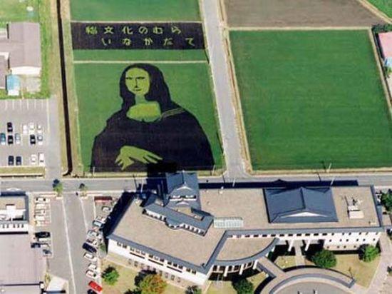 Выращивание риса в Японии